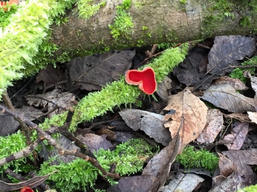 funghi 1