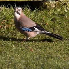 Flora and fauna : Jaywalking