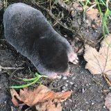 Flora and fauna – Mr Mole