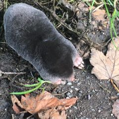 Flora and fauna – Mr Mole
