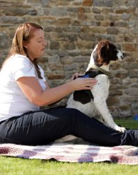 The Crescent Veterinary Physiotherapy
