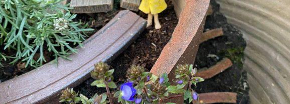 New Mills fairy garden